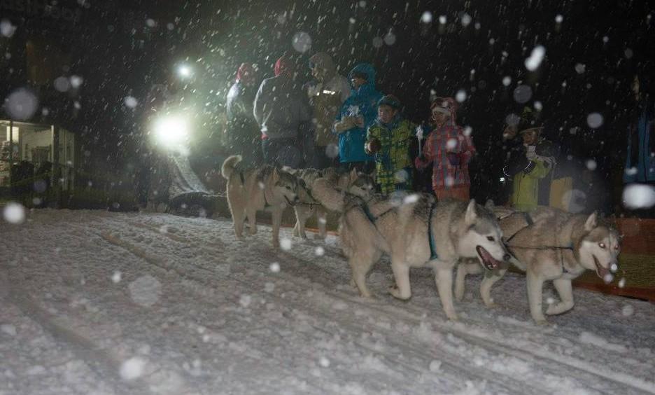 Falls Creek Sled Dogs
