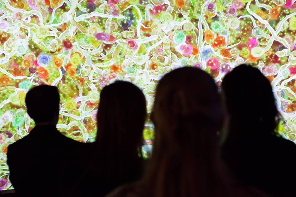 Melbourne Museum Illumination