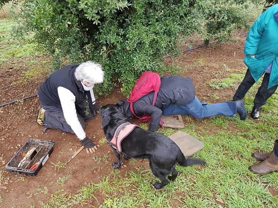 Black cat truffles a tates of truffles