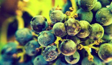 Hunter Valley Wineries