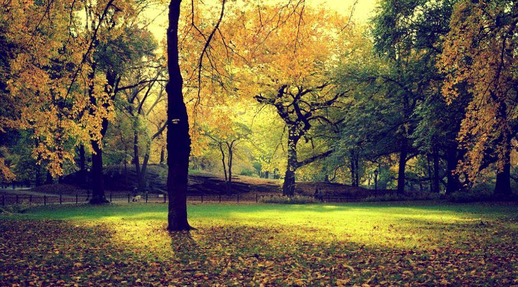 Sydney Park and Picnic Spot