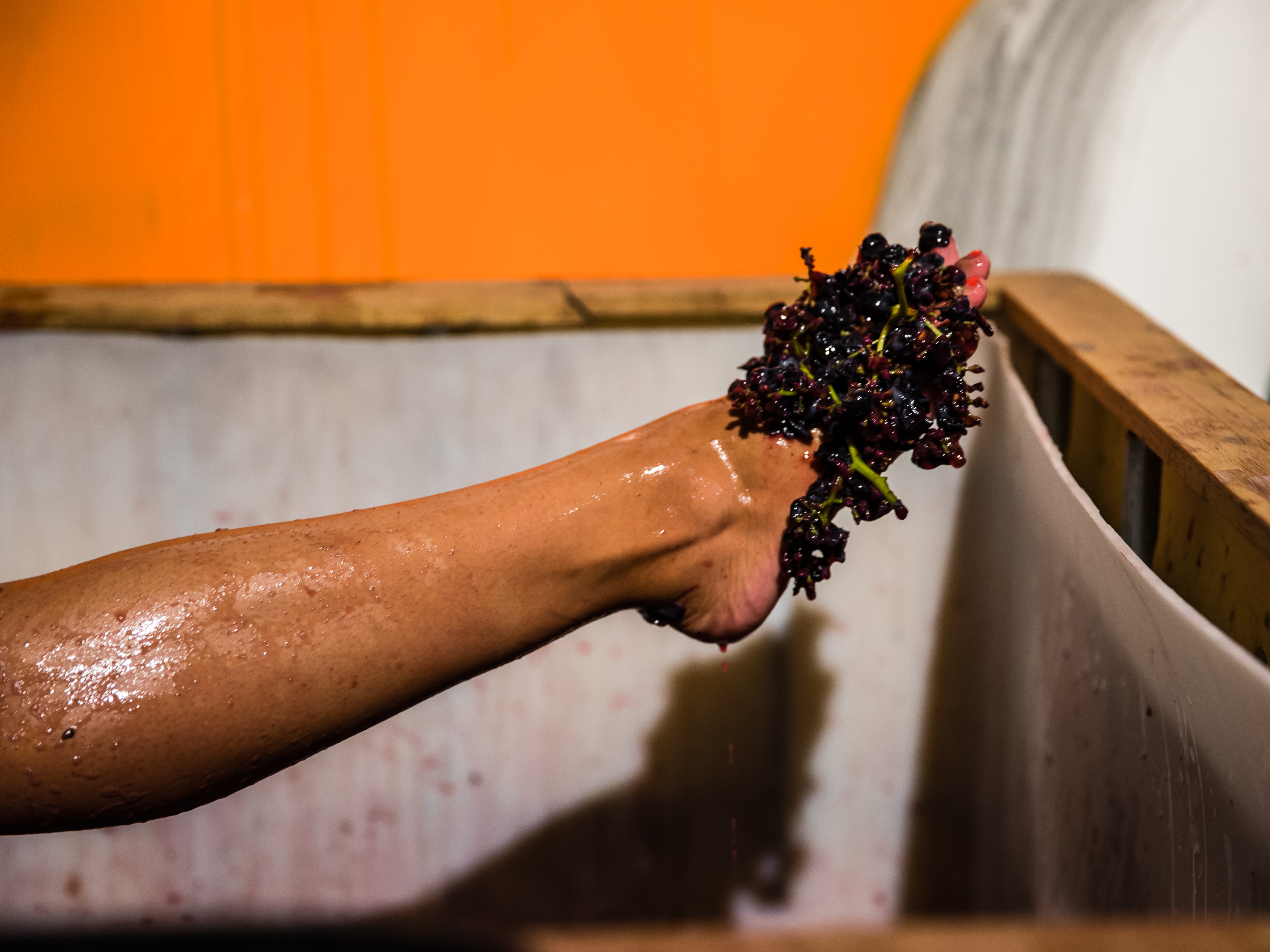 urban winery project